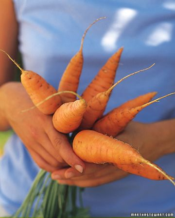 How to Grow Root Vegetables by marthastewart #Root_Vegetables #Vegetable_Growing_Guide #marthastewart