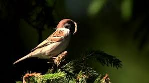 Image result for sparrow nest images