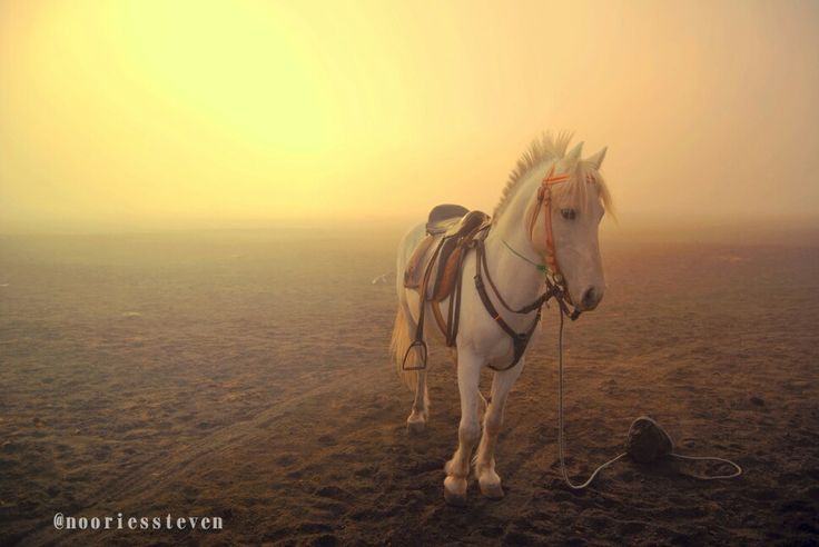 The horse.. From bromo mountain !