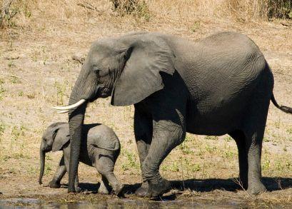 Vamos para África do Sul> Safaris na África do Sul                                                                                                                                                                                 Mais
