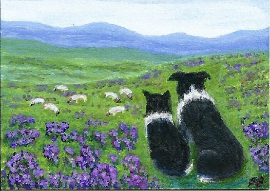 """""""Heather Hills Watch"""" shows two Border Collies sitting in heather and watching sheep in a Scottish landscape from an original ACEO painting by North Carolina artist, Fran Brooks. www.artistnannie.com"""