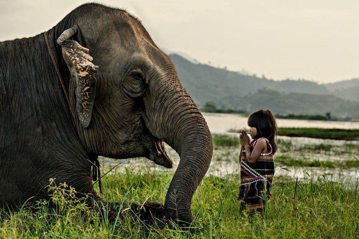 """""""Kim Luan (6 ans) et son éléphant. La minorité M'Nong vit dans les montagnes centrales du Vietnam. Il est très rare de voir un M'Nong vêtu d'un costume traditionnel au Vietnam. Les éléphants sont considérés comme des membres de la communauté.""""  Montagnes centrales - Vietnam"""