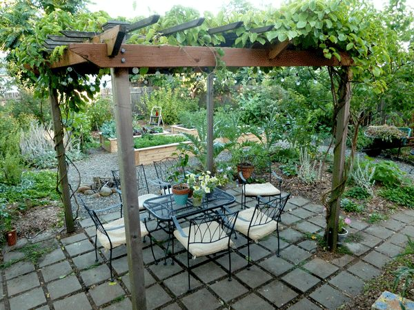 Awesome pergola for growing hardy kiwis on. http://www.hipchickdigs.com/2012/08/pergola-patio-update/