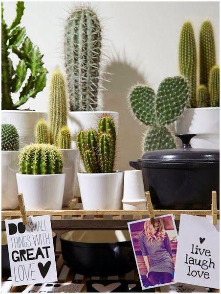 Plantas: Cactus para decorar