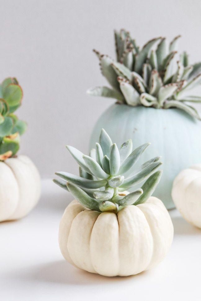 DIY Mini Pumpkin Planters