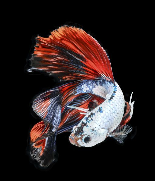 101 best images about sea creatures on pinterest pets for Cool betta fish names