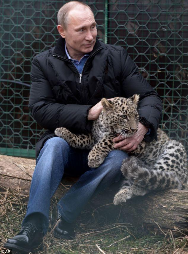 Vladimir Putin petting a snow leopard
