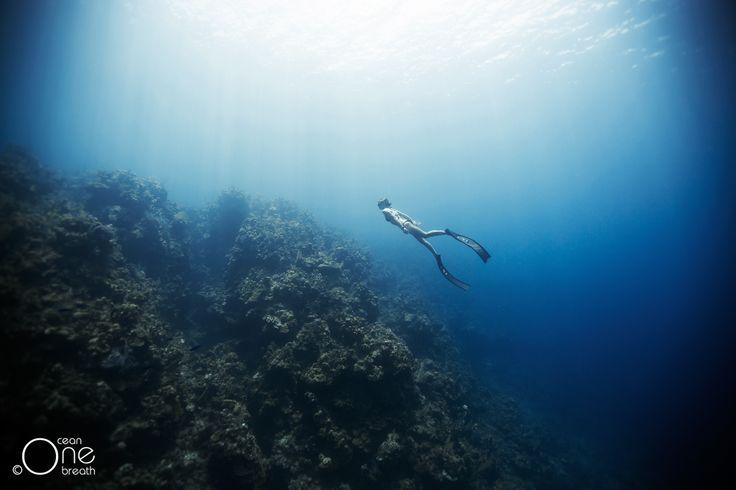 ... Cruising ... Photo taken on one breath by Eusebio Saenz de Santamaria. #freediving #underwater #1ocean1breath #ocean #oneoceanonebreath