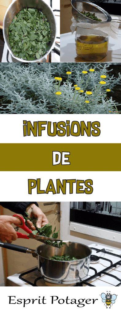 Infusion de plante : fongicide et insecticide naturel pour le jardin