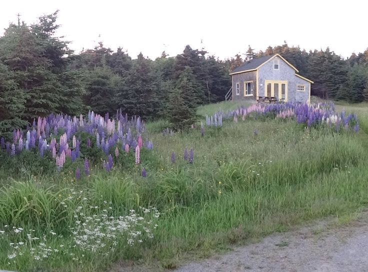 Small house in a landscape on Magdalen Islands Quebec