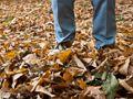 Herbstanfang - Wann ist Herbst? --- Meteorologisch, astronomisch (kalendarisch), phänologisch