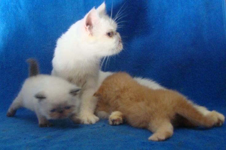 I love catsIn guadalajara Tha cats ar so
