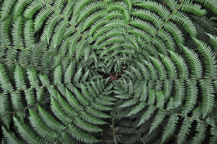 https://flic.kr/p/trhWxo   Australian National Botanic Gardens   (Unable to identify this palm) © Gabriella Tagliapietra / PInch River