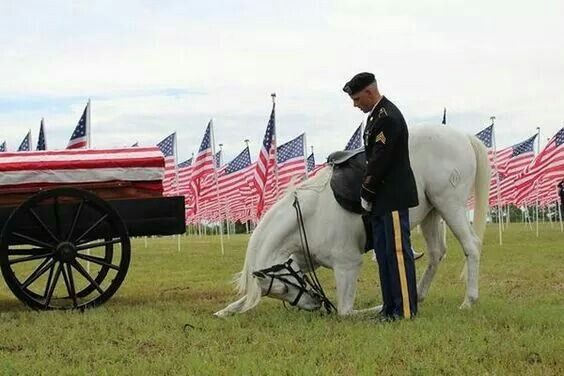 Saw this moving photo on The Veterans site. Pinned by Robin Shake
