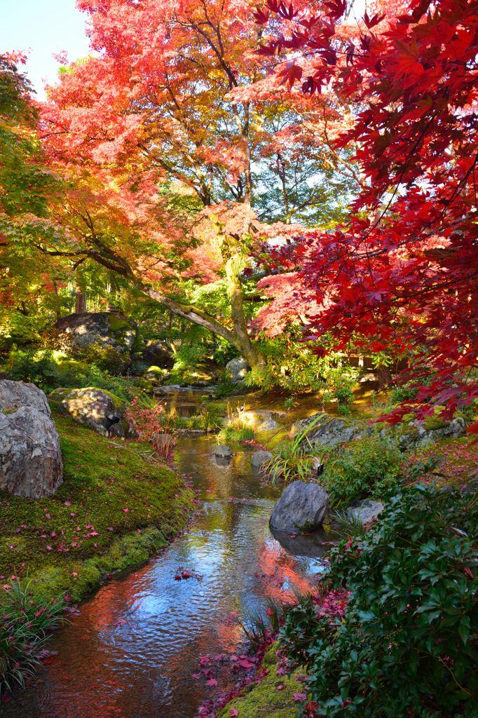 Fall in Garden of Hogonin Temple, Kyoto, Japan