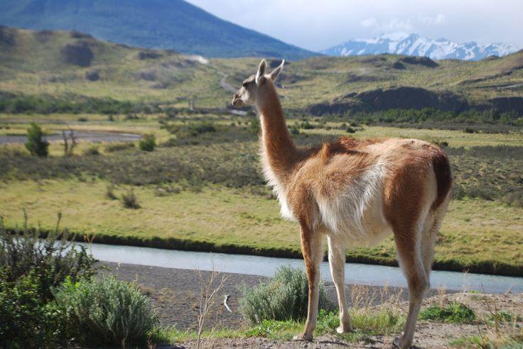Fauna en Torres del Paine