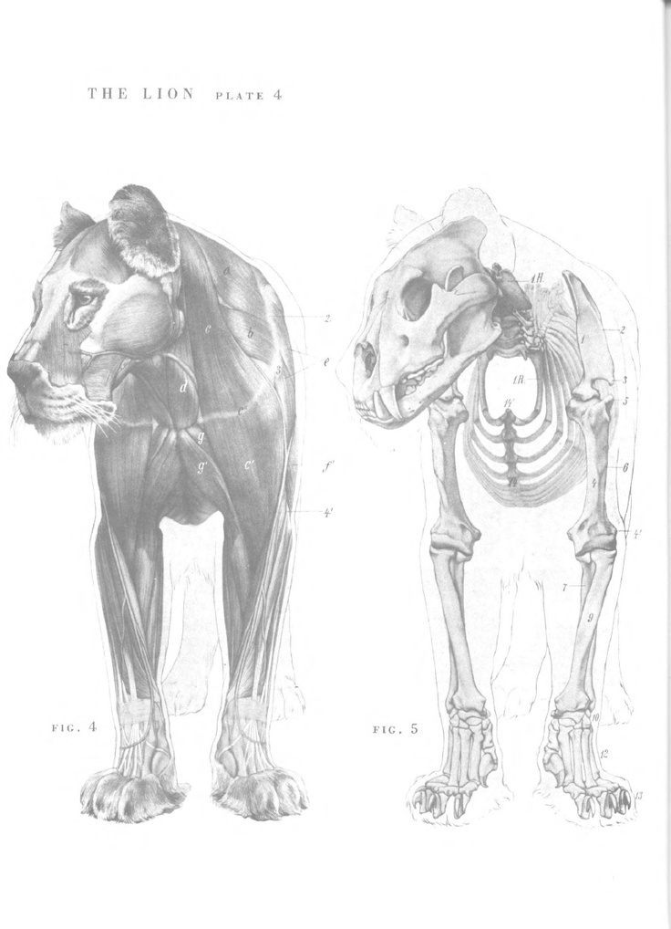 Awesome Cat Anatomy Bones Images - Human Anatomy Images ...