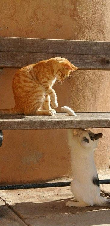 "* * ORANGE CAT: "" Dat's novel. Okey, I knowz yer down der - nowz weez kin haz at it ! """