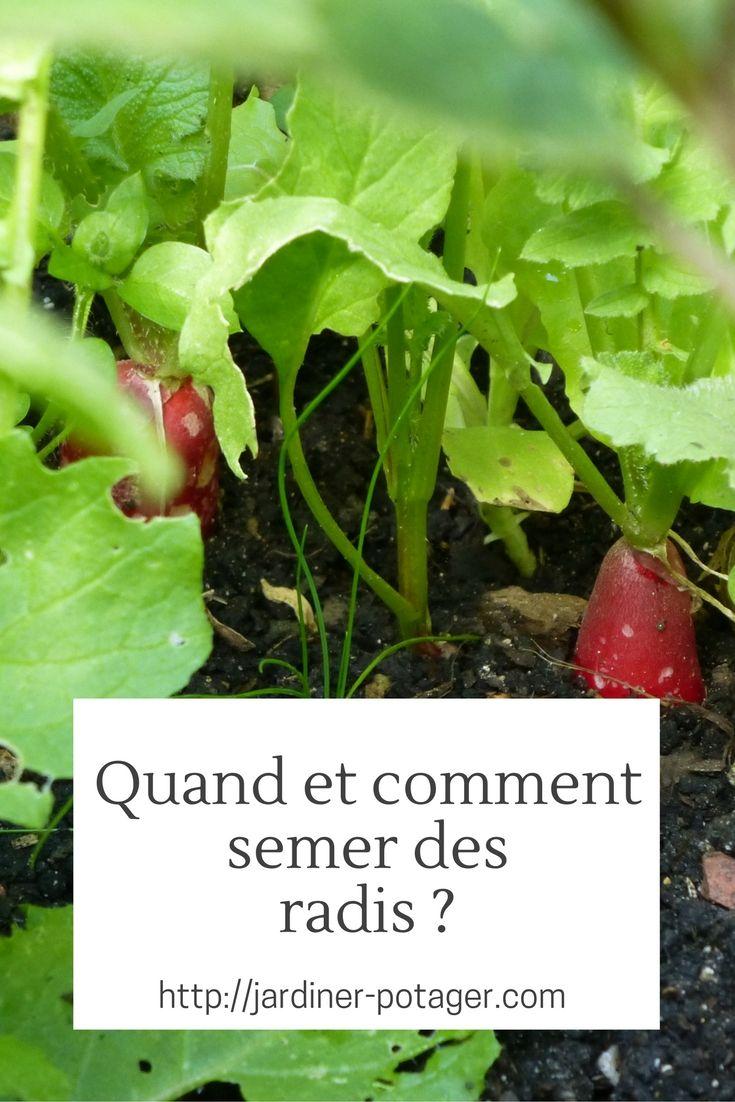 Les 302 meilleures images propos de jardinage l 39 cole sur pinterest pi ces de monnaie - Quand cueillir les radis ...