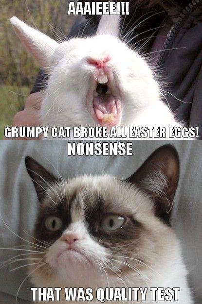grumpy cat meme - Google Search