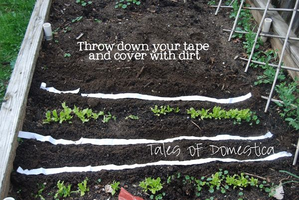 17 Clever Hacks for Your Vegetable Garden - Toilet Paper Seed Tape