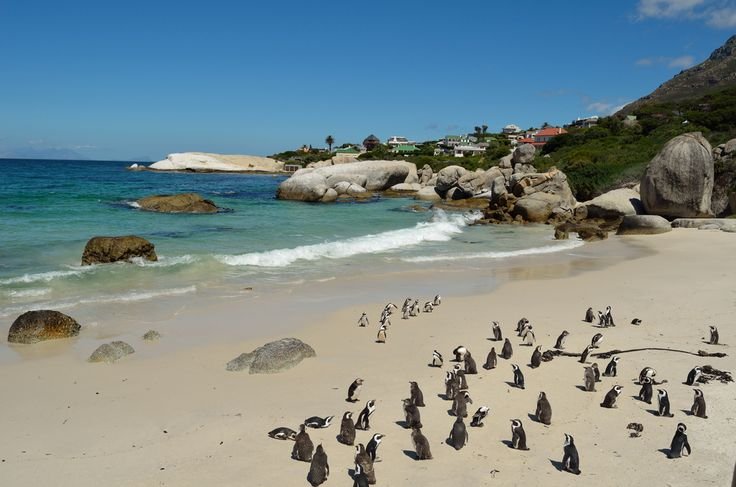 You will just love to take a trip to Cape Town, which is an ideal holiday destination for all and book your #flightstoCapeTown. Here are some highlights of attractions and activities visit now @ http://goo.gl/9vCJdr