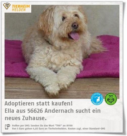 Ella wurde wegen Zeitmangel im Tierheim Andernach abgegeben.  http://www.tierheimhelden.de/hund/tierheim-andernach/mischling/ella/10768-0/  Ella ist super unkompliziert und wurde als Zweithund gehalten. Das kann sie im neuen Zuhause auch sein. Sie ist super menschenbezogen und kann gut alleine bleiben.