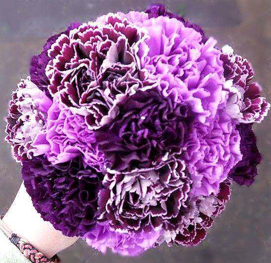 purple carnation bouquet | Dill's Passionately Purple Carnation Cluster Bridesmaid Bouquet