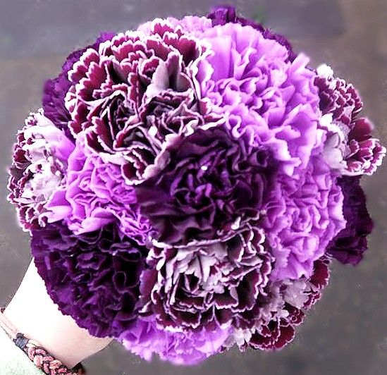 purple carnation bouquet | Dill's Passionately Purple Carnation Cluster Bridesmaid Bouquet