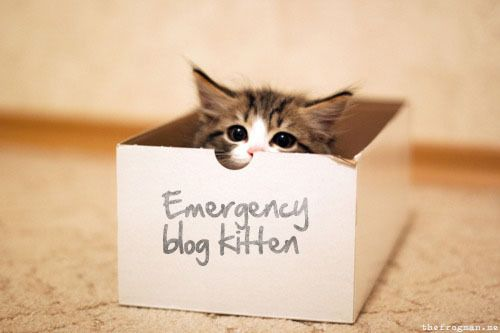 Don't attempt a post without one.: Cats, Post, Boxes, Emergency Blog, Kittens, Blog Kitten, Kitty, Peek A Boo, Photo