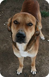 Pilot Point, TX - Shepherd (Unknown Type) Mix. Meet JED a Dog for Adoption.