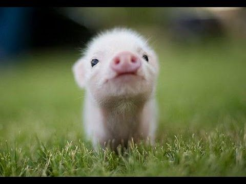 If I had to put a number grade on how cute it is I would give it a 100000000000000000000