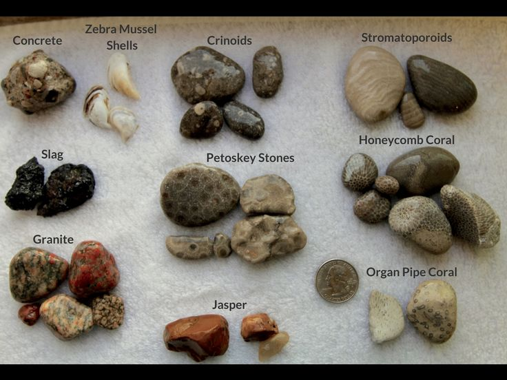 Beachgoers Guide - Various rocks sorted out by type on a piece of white plastic
