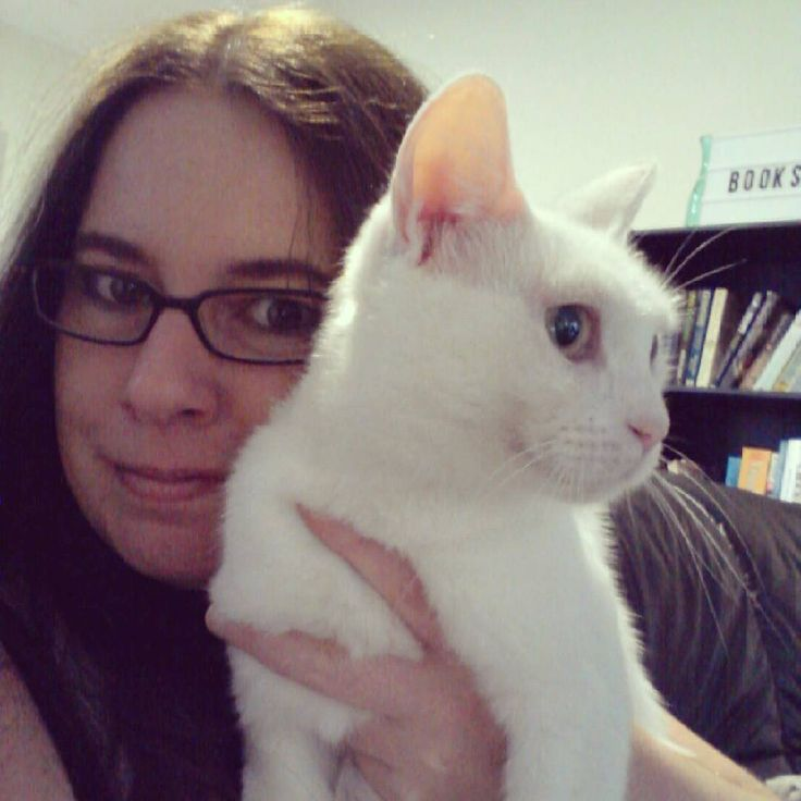 Love this little cute!  #catstagram #catsofmelbourne #catsofinstagram #whitecat #ziggystardust #catandbookhelf #shelfie #bookshelfie #meandmycat #bookstagram #rescuecat #catprotectionsociety #adoptdontshop #happyfriday #love #kittylove