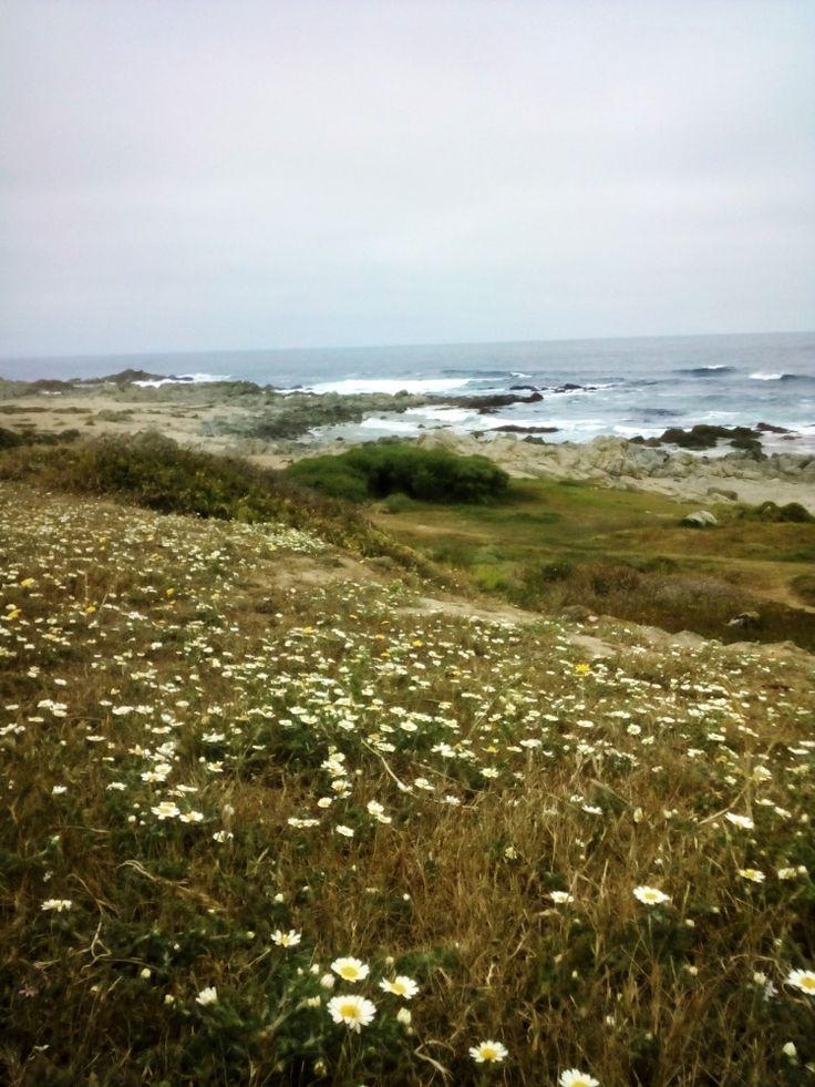 Espectacular: Isla negra en chile una oasis de paz