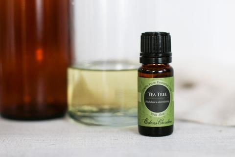 How To Make Your Own Tea Tree Shampoo | Edens Garden