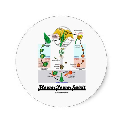 Flower Power Spirit (Angiosperm Life Cycle) Sticker #flowerpower #spirit #flower #angiosperm #lifecycle #wordsandunwords #sepal #meiosis #mitosis #biologist #biology Here's a sticker for anyone with a Flower Power Spirit!