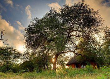 Motswari Private Game Reserve Conference Venue in Timbavati, Limpopo Province