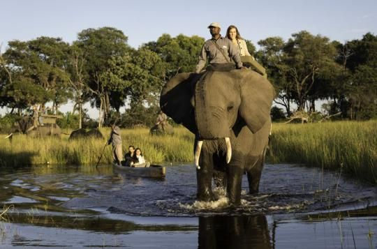 Amazing elephant back safari at Abu Camp (Okavango Delta, Botswana). Wanna visit that fantastic place? Just let us know: info@gondwanatoursandsafaris.com
