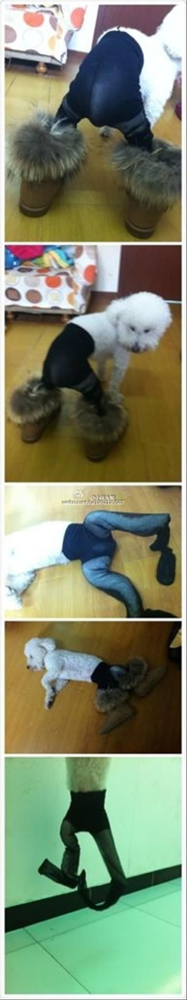 dogs wearing pantyhose meme (8)
