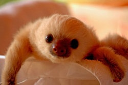 I want this sloth! Beautiful coloring.