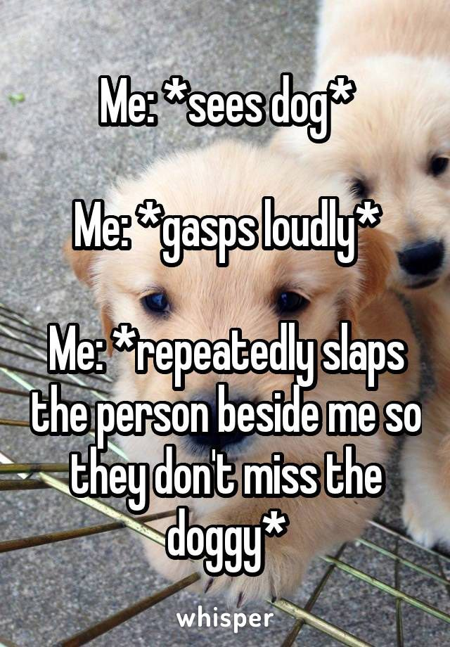 Dogs are adorable