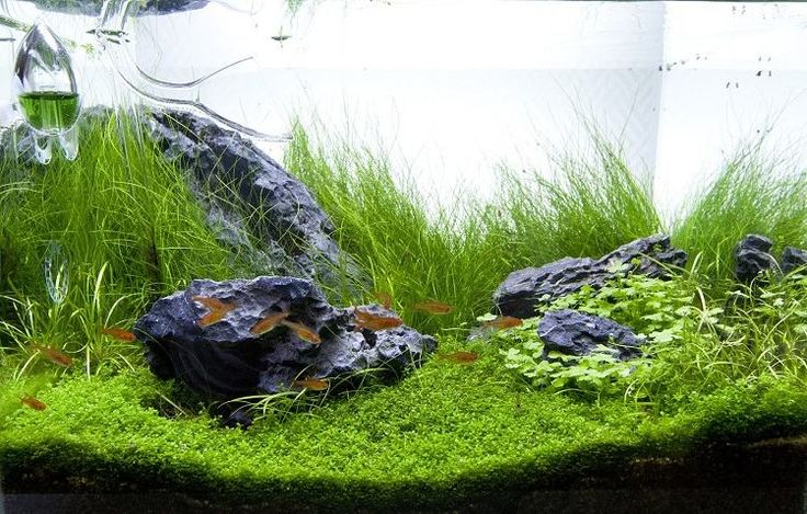 die besten 25 wasserpflanzen aquarium ideen auf pinterest. Black Bedroom Furniture Sets. Home Design Ideas