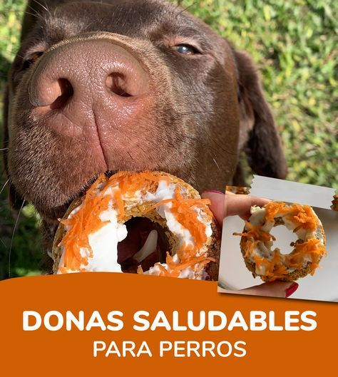 Pet Treats, Healthy Dog Treats, Pomes, Snacks Saludables, Dog Cakes, Pet Life, Dog Snacks, Beautiful Dogs, Border Collie