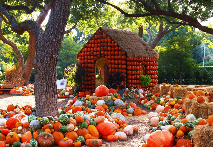 17 best images about autumn at the arboretum on pinterest - Botanic gardens pumpkin festival ...