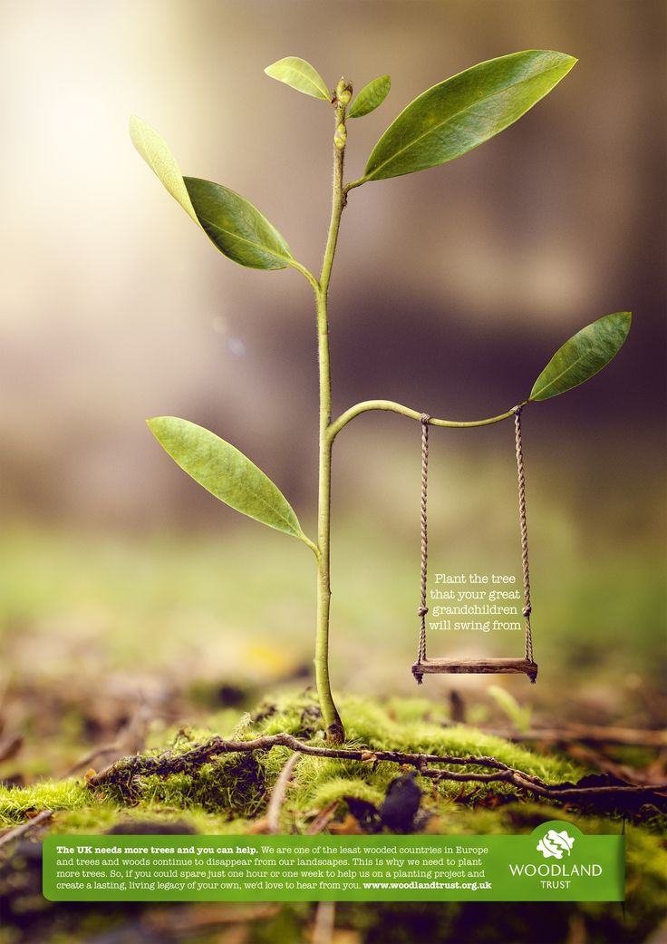 """Woodland Trust """"help us to plant the tree that your great grandchildren will swing from"""""""