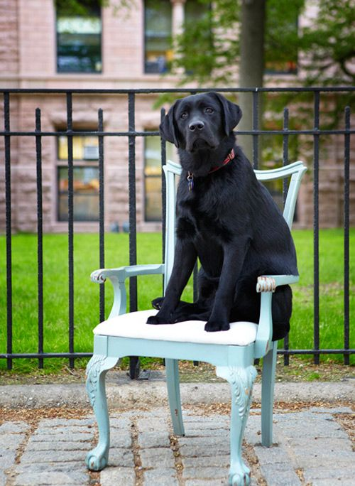 "Sneak Peek: Best of Dogs. ""Winston looking regal in front of his New York City home."" #sneakpeek #dogs"