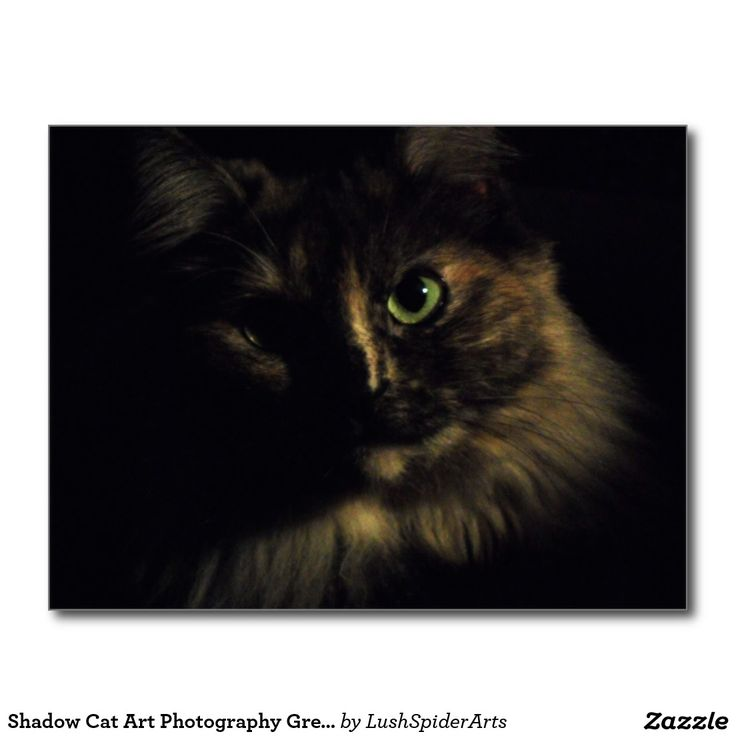 Shadow Cat Art Photography Green Eyes Kitty Postcard