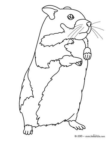 kawaii hamster coloring page