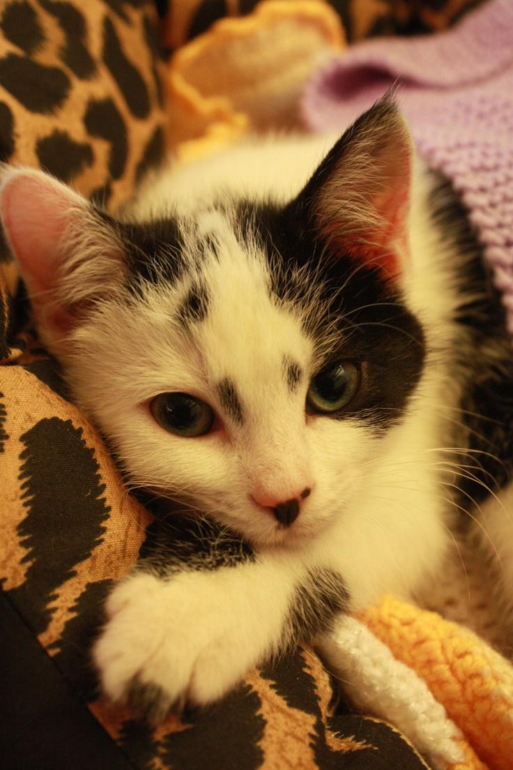 Her name is Venus...: Names, Catz, Venus